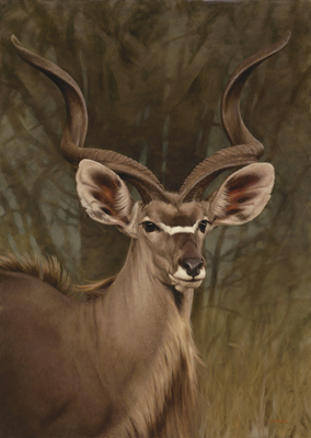 Claire Naylor - GHOST OF THE BUSHVELD - GICLEE - 24 X 17
